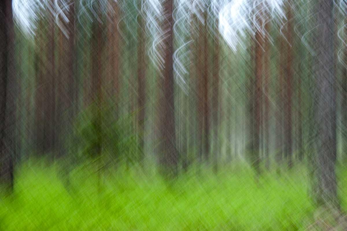 Nature_4010