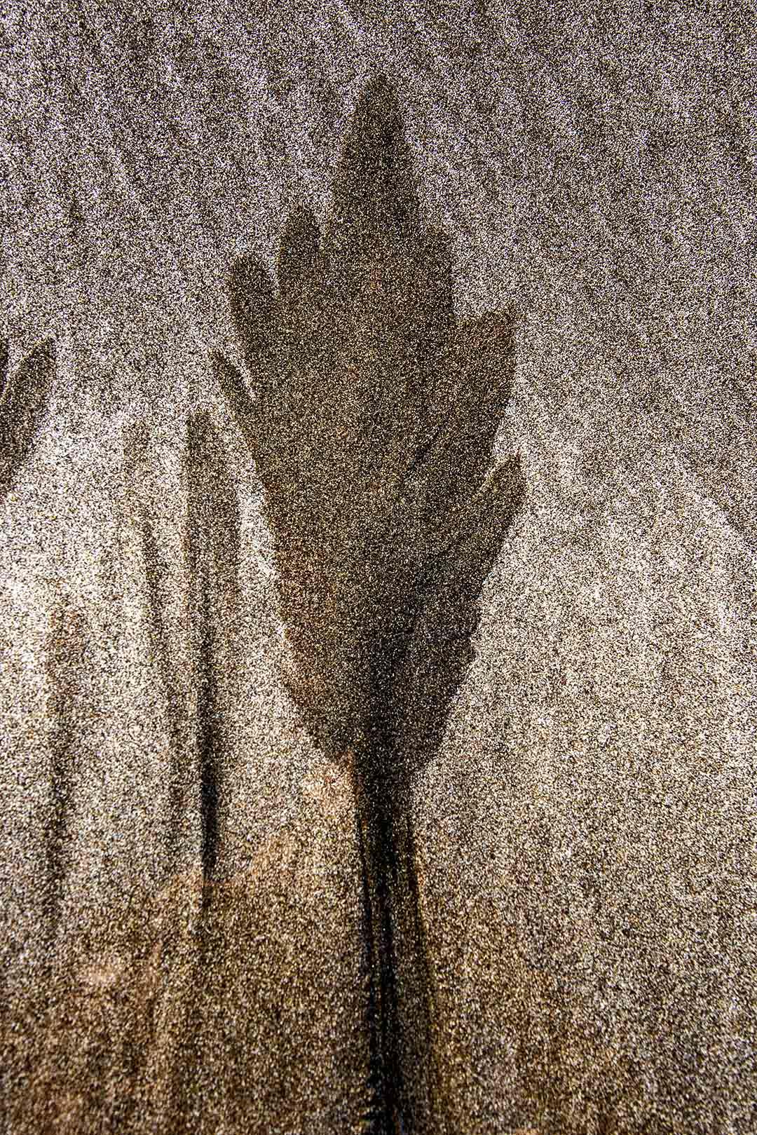 Sand_1083